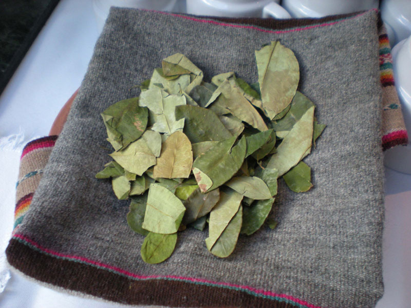 Coca leaves fight altitude sickness in Peru